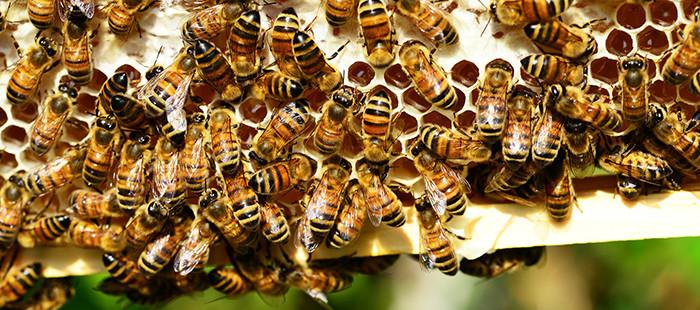 Protection des abeilles : ma ruche, je l'aime, je la déclare !