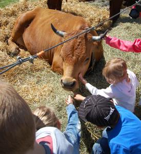 Enfants et vache un berger dans mon école