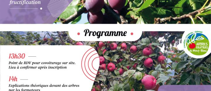 Formation entretien des arbres fruitiers